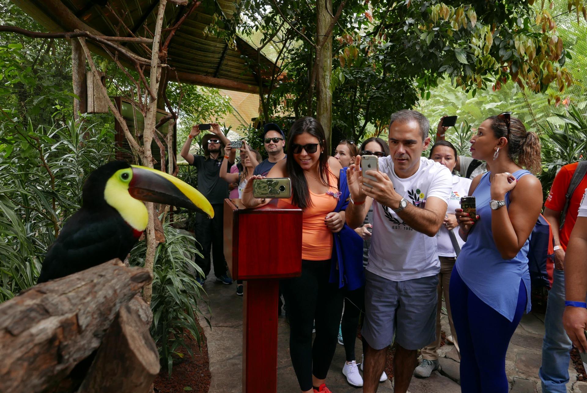 O aviário do La Paz Waterfall Gardens encanta adultos e crianças