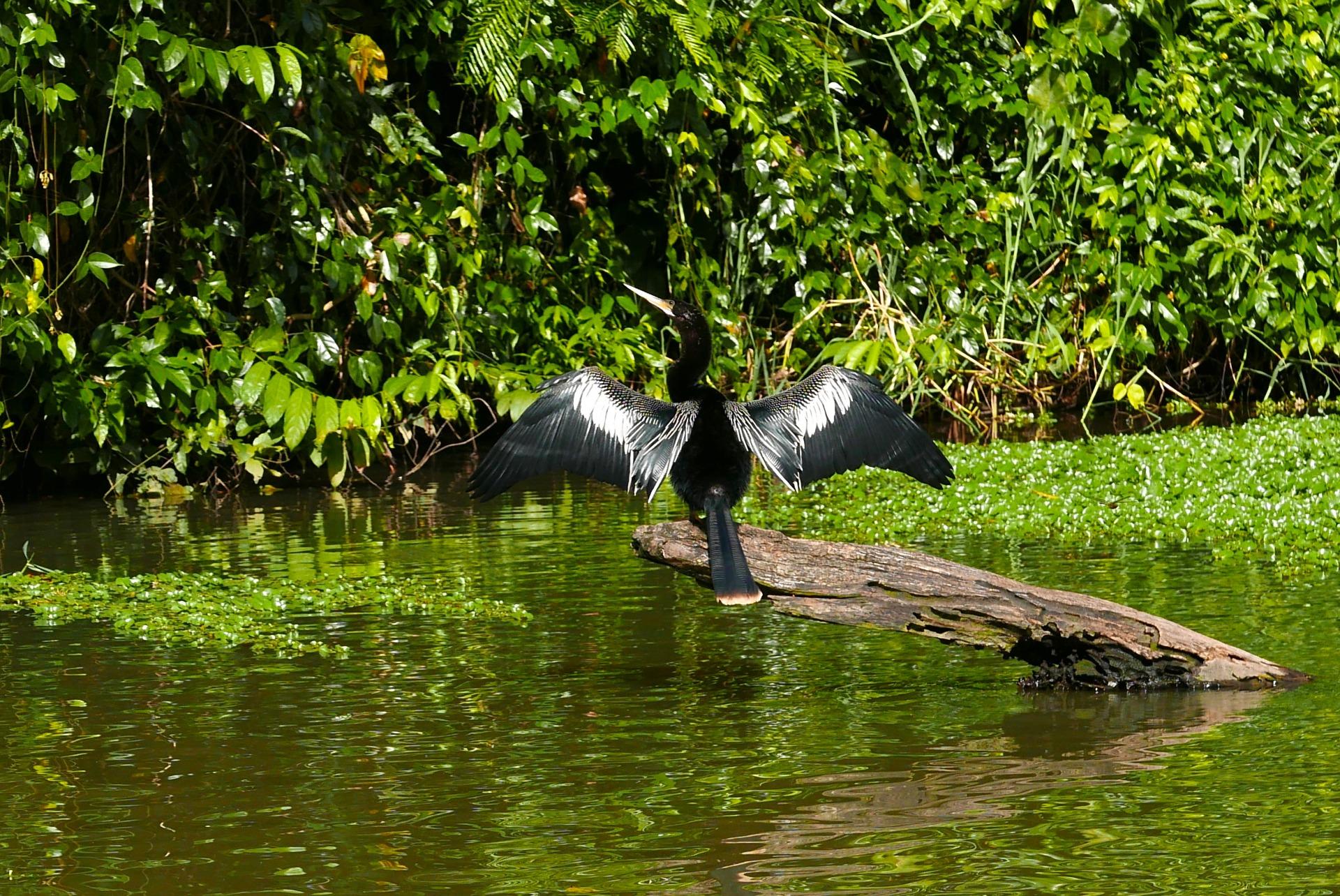 A fauna também dá um show em Tortuguero Costa Rica