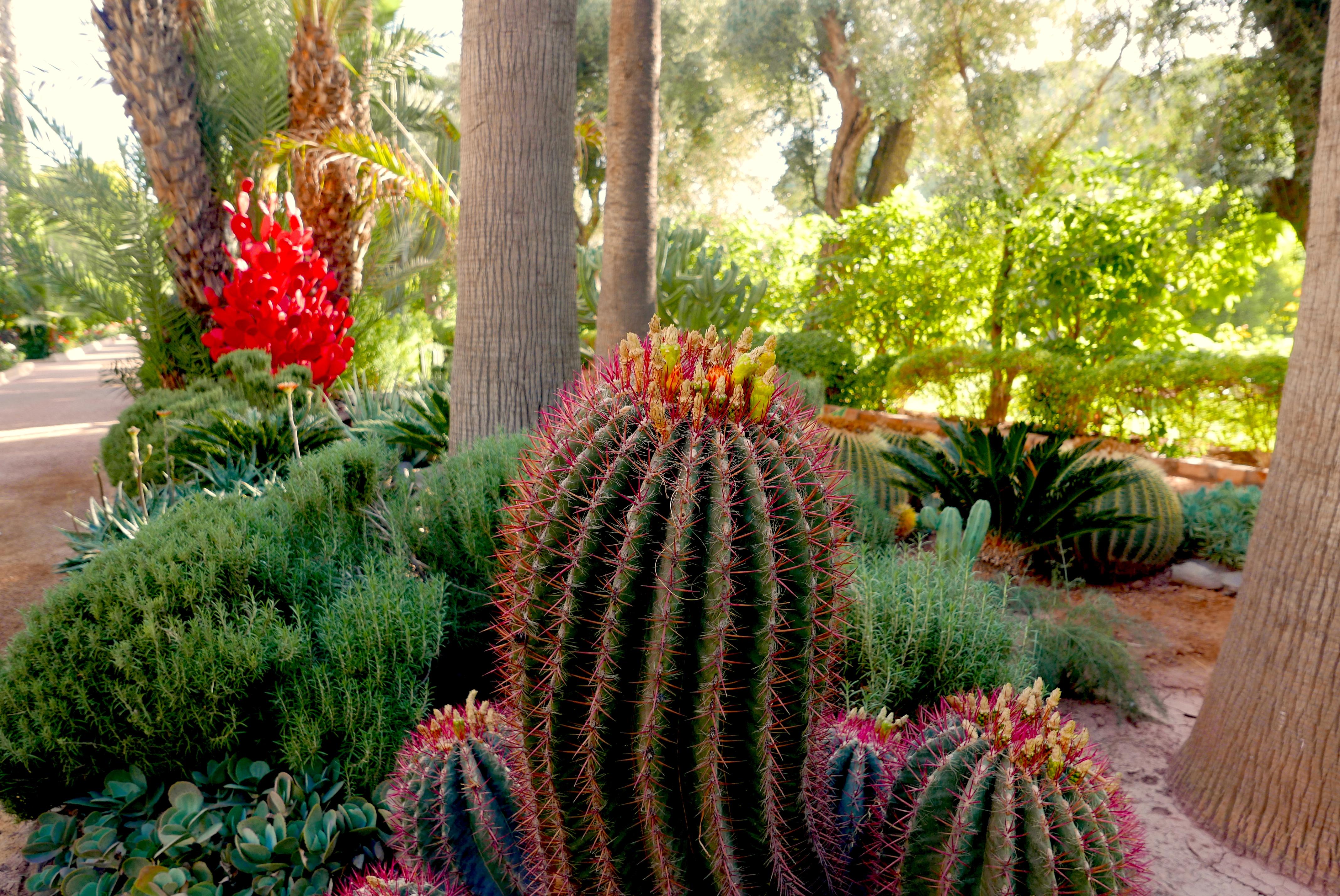 Detalhe de um dos jardins do palácio marroquino
