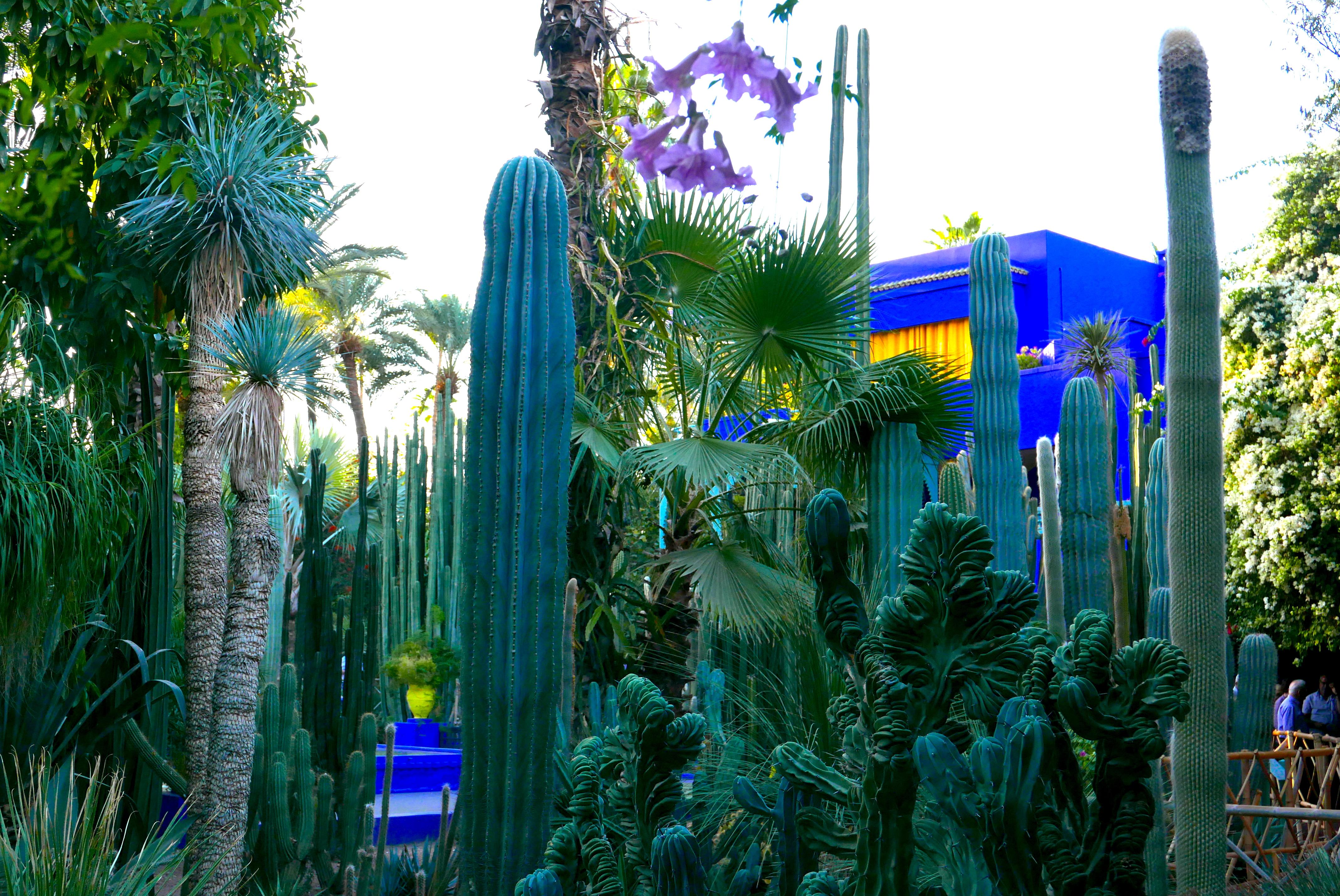 Em um simples detalhe, toda a plasticidade do Jardin Majorelle