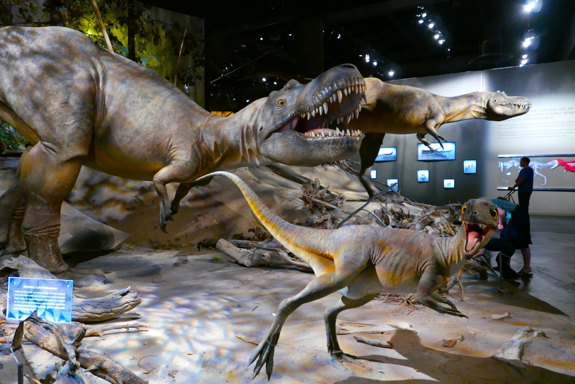 """Uma das salas do Royal Tyrreal Museum, em Drumheller, """"Capital Mundial dos Dinossauros"""" (Claudia Tonaco)"""