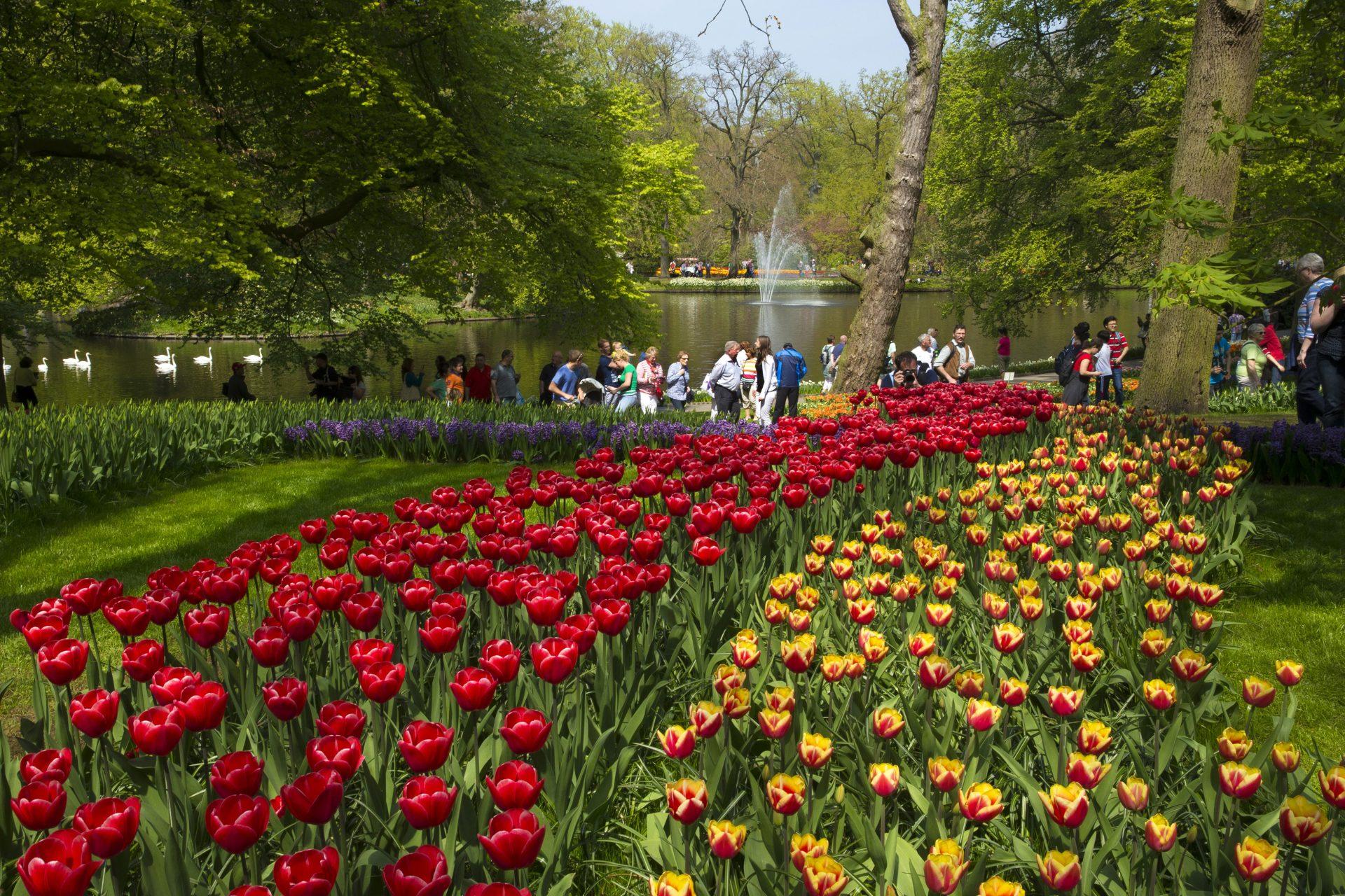 O parque Keukenhof é o maior do mundo e está aberto ao público apenas durante um curto período do ano