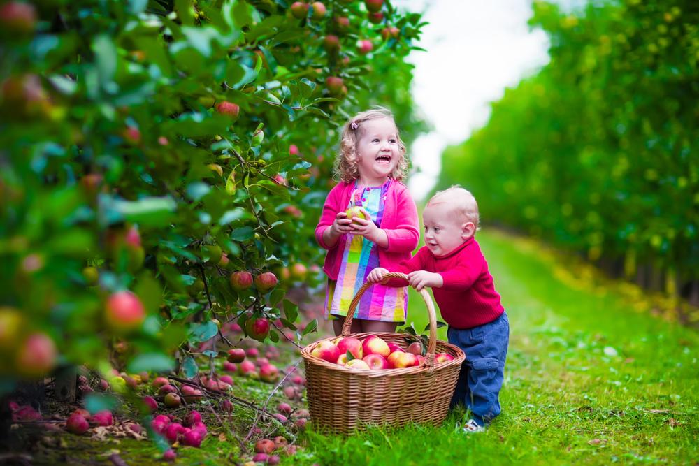 Fazenda de maçã na Califórnia coloca os pequenos em contato com o melhor da natureza