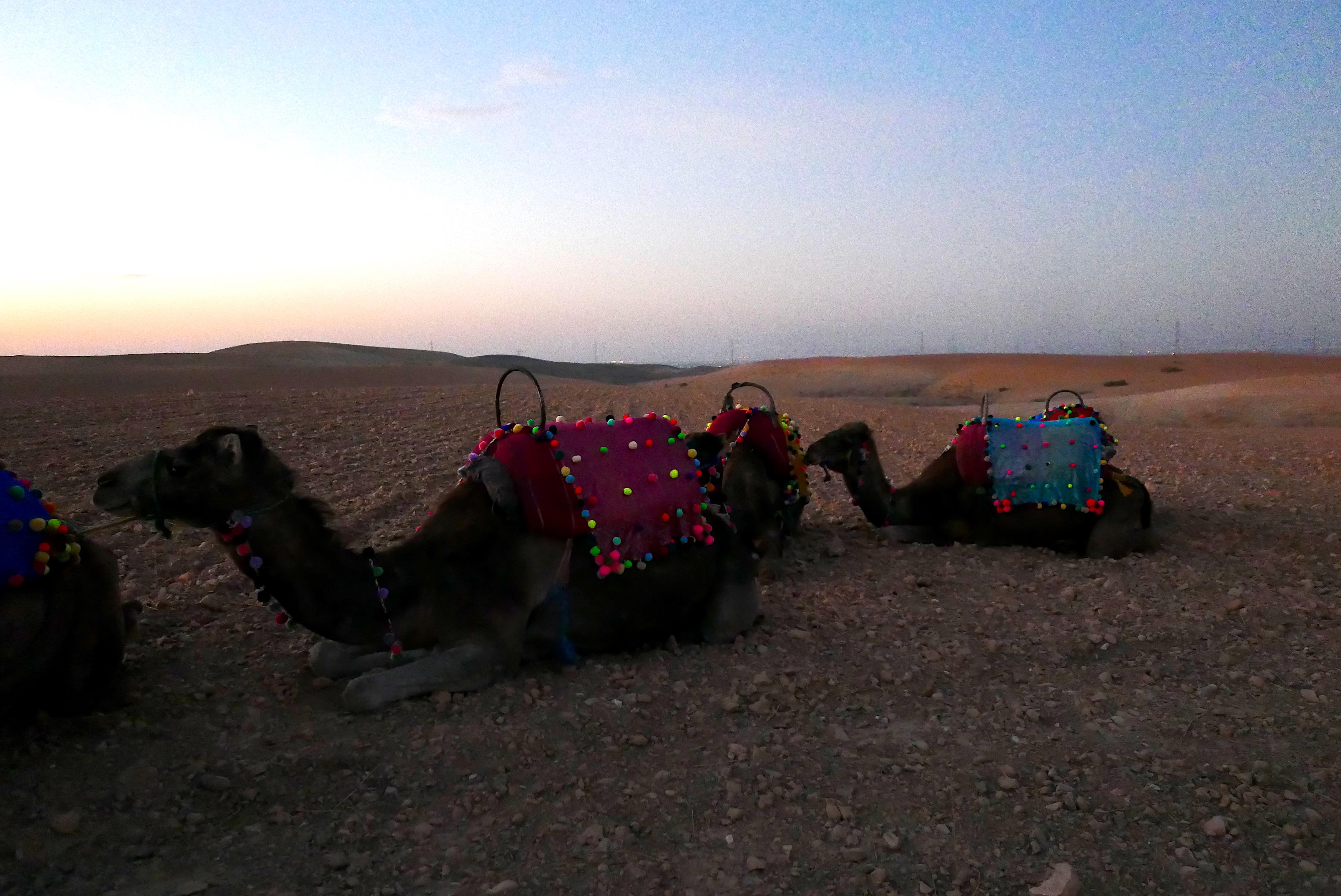 Já na entrada do Deserto de Agafay um novo meio de transporte esperava os convidados
