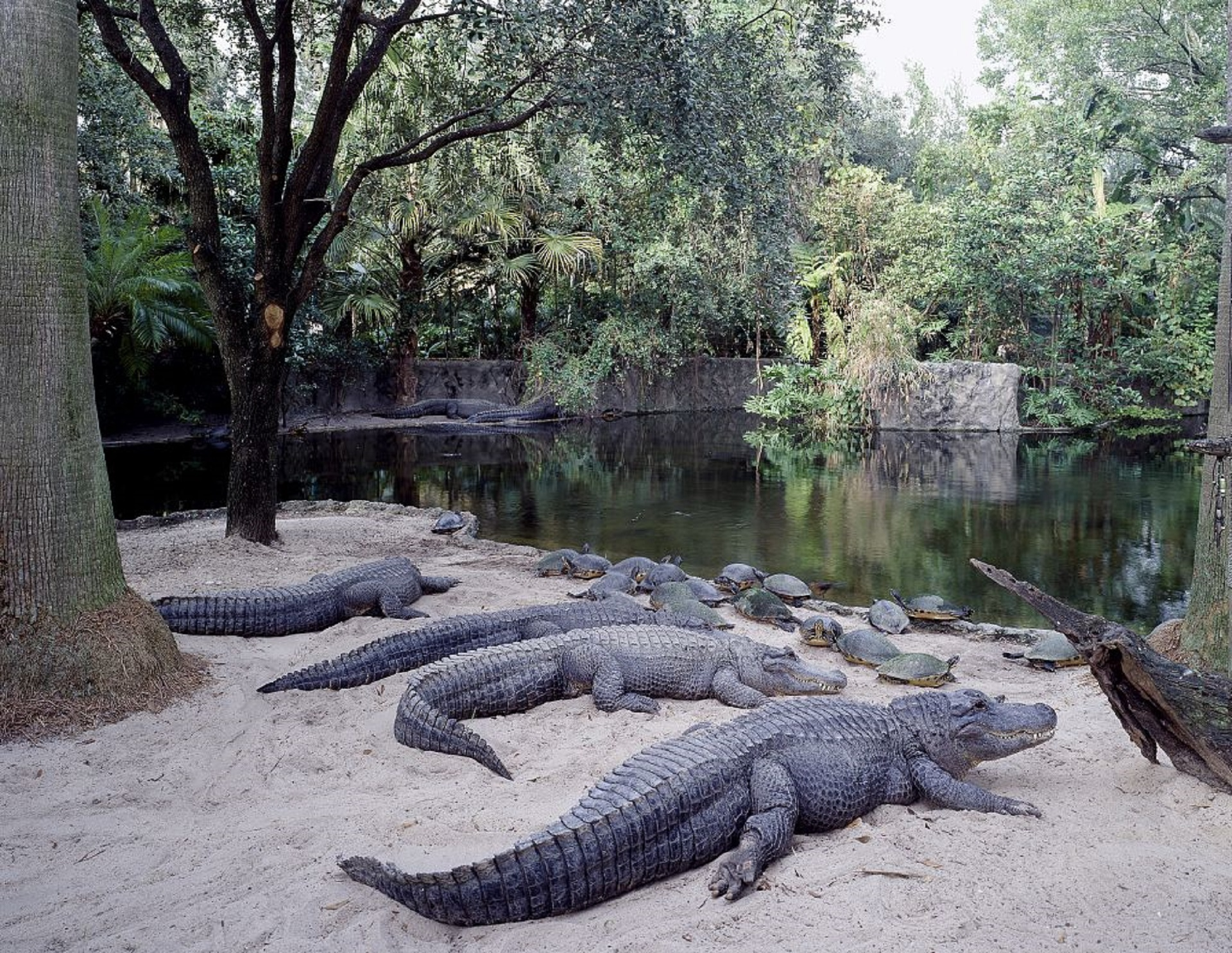 Praia dos Crocodilos, em Busch Gardens, Tampa