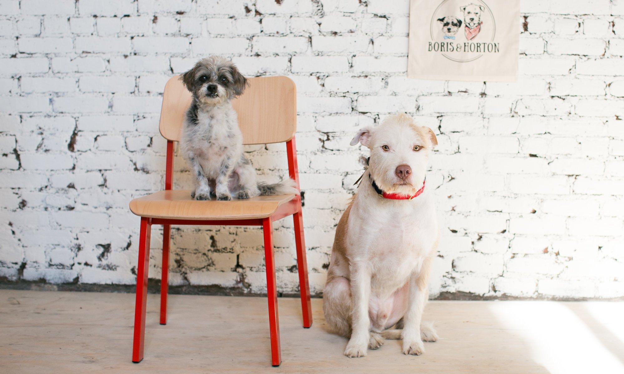 Imagem postada no site do Boris & Horton, o primeiro café para cães de Nova York