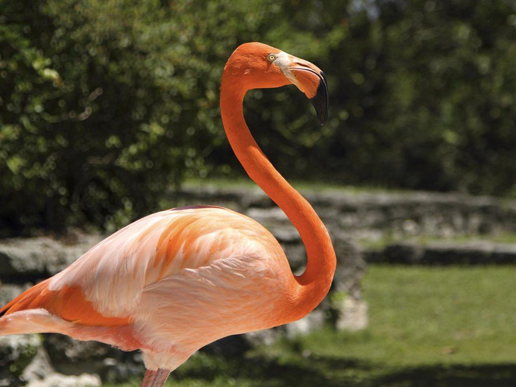 Flamingos no Parque Xcaret (Foto: Xcaret - Divulgação)