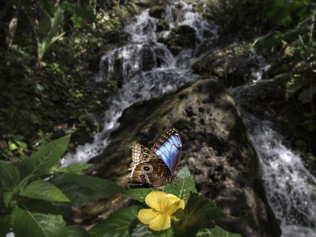 Belíssimo borboletário do Parque Xcaret (Foto: Xcaret - Divulgação)