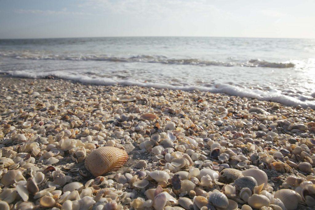 Visit Florida Praia Conchas