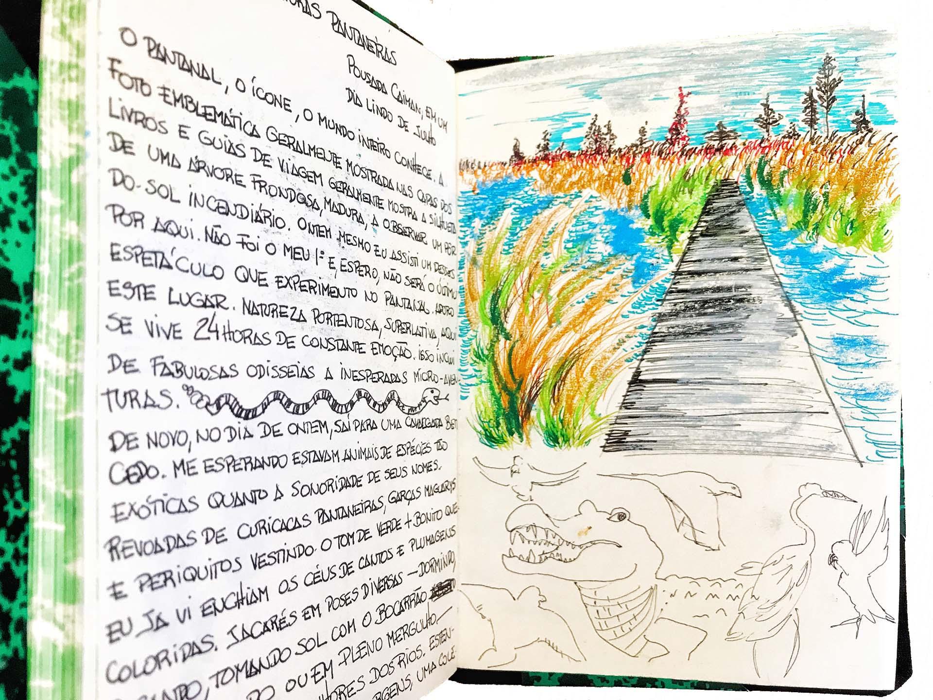 Pantanal (Desenho: Claudia Tonaco)