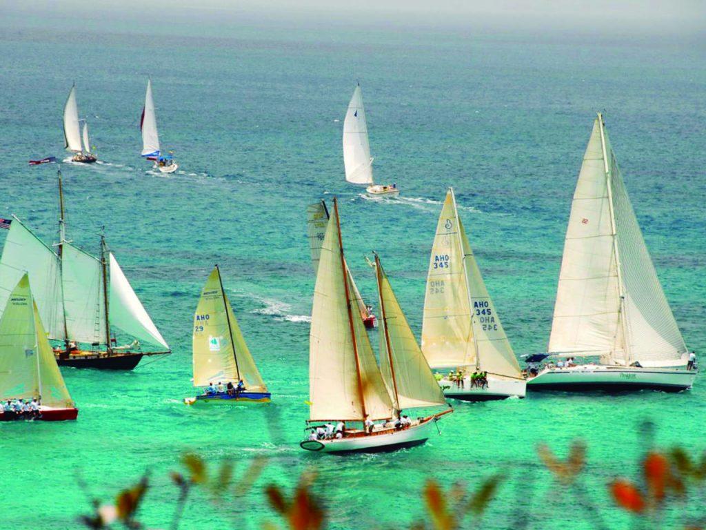 Anguilla Virtuoso